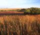 CRP.native grass