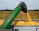 Corn.Harvest.2