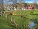 farm stream photo